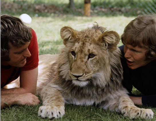 heart warming story of friendship & love between two men and the lion.  Love is universal emotion. friends man and lion UK australia