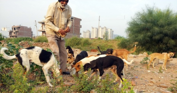 chandigarh dog lover
